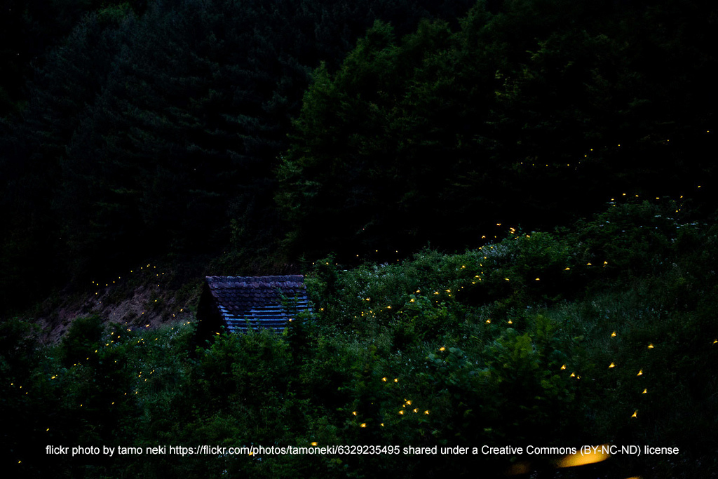 Fireflies01
